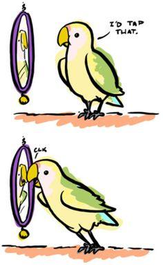 Bird humor. #pets #birds