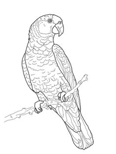Coloring Pictures Of Rainforest Animals - Coloring Pictures Of Rainforest Animals, Coloring Pages Rainforest Animals Coloring Page Free Kids Coloring Pages, Bird Coloring Pages, Free Printable Coloring Pages, Coloring Books, Bird Drawings, Animal Drawings, Parrot Drawing, Rainforest Animals, Amazon Rainforest