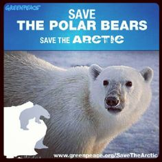 Be one of the Arctic defenders! Save The Polar Bears, Save The Arctic, Defenders, First World, Philippines, Animals, Animales, Animaux, Animal