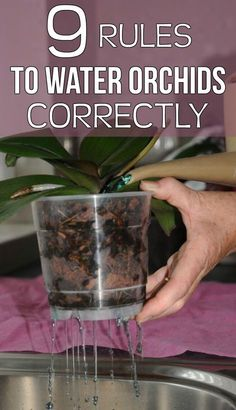 9 rules to water orchids correctly - Gardaholic.net