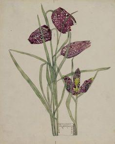 Charles Rennie Mackintosh, Fritillaria, 1915 © The Hunterian Museum and Art Gallery