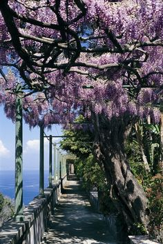 Wisteria Walkway at La Villa San Michele, Capri