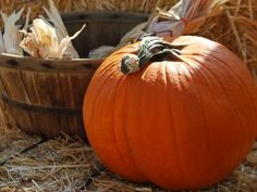 Looking for a wine that is good in the fall? Maybe seeing pumpkin beer has got you bummed out if your a wine maker. Well this is the recipe that you want to do if you want to make a pumpkin wine. Free Pumpkin Patch, Photo Fruit, Pumpkin Wine, Cordial Recipe, Pumpkin Picking, Homemade Wine, Corn Maze, Fall Harvest, Autumn