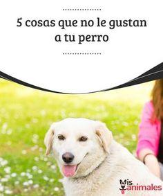 5 cosas que no le gustan a tu perro Abrazos, falta de reglas claras, que lo humanices o que no le prestes atención. Conoce algunas de las cosas que no le gustan a tu perro. #perro #consejos #gustos #cosas