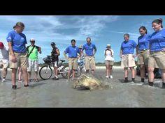 SeaWorld Orlando Animal Rescue Team Returns Green
