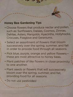 Save the honeybees!