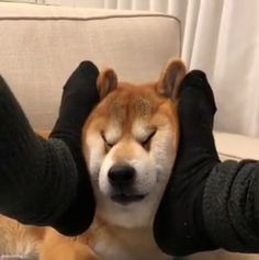 'Right there, yep that's the spot. Like Animals, Cute Little Animals, Funny Animals, Funny Animal Pictures, Dog Pictures, Cute Memes, Cute Dogs And Puppies, Shiba Inu, Akita