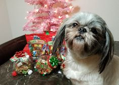 Susie's Reviews and Giveaways: Share Joy This Holiday With DIY Dog Treat Jars Fea...