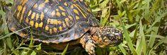 Heb jij een #schildpad of ander #reptiel in huis? De experts van #PetsPlace geven je advies!