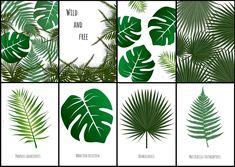 plakaty motyw botaniczny do pobrania do druku