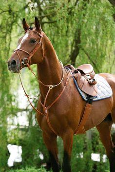Copperfox Trifle the Exmoor Pony Model Horse