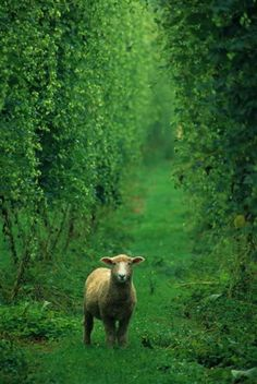Phillip Lovell took a photo of this little lamb in New Zealand. Check out more photos: http://on.msnbc.com/y339XQ