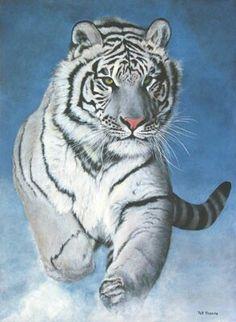 Bellissima tigre bianca