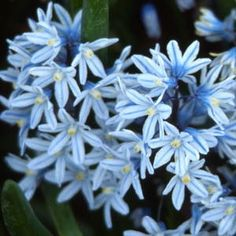 83 Best Ephemerals And Spring Flowers Images Beautiful Flowers