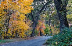 Runners enjoy the fall colors in Lower Bidwell Park, Chico.