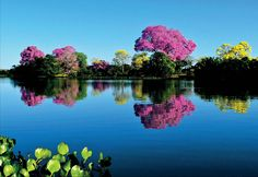 Pantanal Mato-grossense. Brasil  Brazil, Mato Grosso.