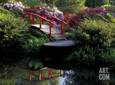 Moon Bridge and Pond in a Japanese Garden, Seattle, Washington, USA Photographic Print by Jamie & Judy Wild at Art.com