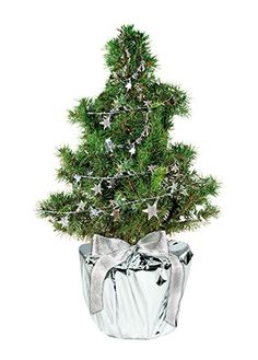 HSG Relatiegeschenken, de expert voor al uw promotionele artikelen! Christmas Tree, Holiday Decor, Plants, Cardboard Packaging, Advent Season, Holiday Tree, Weihnachten, Nice Asses, Teal Christmas Tree