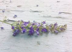 The Truth Faerie: Lavender