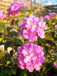 Flowering & native plants for Texas website