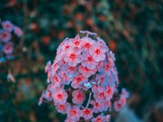 WHERE DO HYDRANGEAS GROW MORE ? DO HYDRANGEAS LIKE ACID OR ALKALINE SOIL? Garden Line, Sky Garden, Garden Club, Rocks Garden, Hydrangea Tree, Climbing Hydrangea, Hydrangeas, Organic Horticulture, Organic Gardening