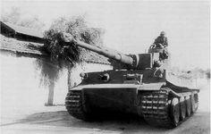 Tiger I N°142 of SpzAbt 501 Tunisia.