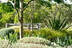 Diamond Beach Landscape Design by Secret Gardens - Sydney Landscape Architects Bush Garden, Garden Mum, Dry Garden, Garden Paths, Beach Landscape, Landscape Design, Landscape Architecture, Patio, Backyard