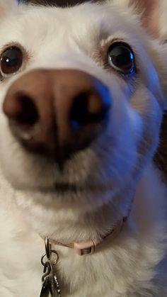 Niki Dogg 2017...WHAT A DOG!!