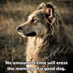 I will forever miss u Bear..