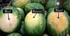 Bondens smarta trix: Så väljer du rätt vattenmelon