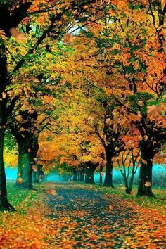 Beautiful World, Beautiful Places, Beautiful Pictures, Trees Beautiful, Beautiful Roads, Beautiful Nature Wallpaper, Amazing Places, Fall Pictures, Nature Pictures