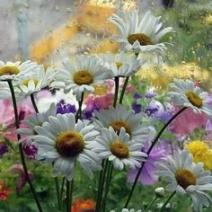 """SPRING IS LIKE A DOLL& MY GOD... How I like to play with their pale tunes. I dream I bring joyfull colors into their soft curly hair! while it still holding some imprints of the whirling winds drifting out °f some """"black holes"""", after """"THE GREAT WINTER"""" died out."""