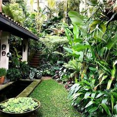 30 Top-Tropengarten-Ideen 30 Top-Tropengarten-Ideen 30 Top Tropical Garden Id. - 30 Top-Tropengarten-Ideen 30 Top-Tropengarten-Ideen 30 Top Tropical Garden Ideas Source by Fruga - Tropical Patio, Tropical Garden Design, Tropical Landscaping, Modern Landscaping, Outdoor Landscaping, Backyard Landscaping, Tropical Gardens, Landscaping Design, Steep Backyard