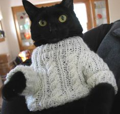 I will NOT become my grandmother and start making clothes for my cats. I will NOT become my grandmother and start making clothes for my cats. I will NOT become my grandmother and start making clothes for my cats. Cool Cats, I Love Cats, Crazy Cat Lady, Crazy Cats, Gatos Cool, Funny Animals, Cute Animals, Photo Chat, Cat Sweaters