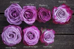 Color Study of Lavender and Purple Roses by Harvest Roses - http://www.harvestwholesale.com Cool Water, Cool Paris, Blueberry, Rock Fire - Moody Blues, Queen of the Night, Deep Purple