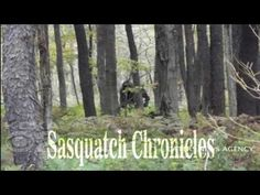 Bigfoot Hotspot Radio // SC EP:76+1 Show Notes With Shannon-Jesus Payan [Sasquatch Chronicles]