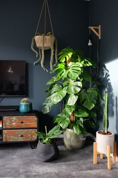 Botanical interior, lots of plants and lots of green! Home Interior, Interior Design Living Room, Living Room Designs, Green Rooms, Bedroom Green, Room With Plants, House Plants, Monstera Deliciosa, Entryway Decor