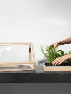 Bangkok studio Atelier 2+'s Greenhouse Mini is designed to encourage owners to bring greenery into their houses.