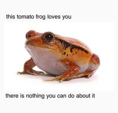 Animal Memes, Funny Animals, Cute Animals, Frog Pictures, Frog And Toad, Frog Frog, Cute Frogs, Wholesome Memes, Good Vibes Only