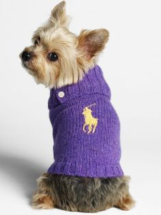Ralph Lauren Dog Sweaters - hmmmm should I get these for the pack?
