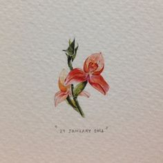 """Day 29 : Disa uniflora, or """"The Pride of Table Mountain"""". 20 x 30 mm. #365postcardsforants #miniature #watercolor #wdc624 #disa #capetown  (at Table Mountain National Park)"""
