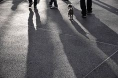 . . . . . #sunset #sky #clouds #beautiful #landscape #travel #art #style #night #photography #photographer #nature #naturephotography #wildlife #flowers  #photooftheday #streetphotography #filmphotography #film #35mm #followme #instagood #portrait #blackandwhite #nofilter #justgoshoot #cat #dog #vsco #bnw http://tipsrazzi.com/ipost/1508097737395808260/?code=BTt1ubkDCgE