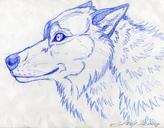 wolf smiling - Google Search