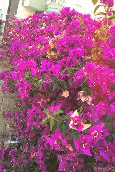 #duvarkağıdı #duvarkağıtları Plants, Flora, Plant
