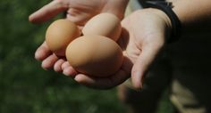 Urban Homesteading: 8 Ways to Save by Going Back to Basics