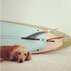 Dog and single fins Chapman at Sea