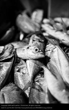Foto 'Fischerei in Vieira Leiria 12' von 'derProjektor'