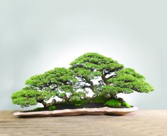 Bonsai Forest / Saikei More Pins Like This At FOSTERGINGER @ Pinterest ㊙️㊗️