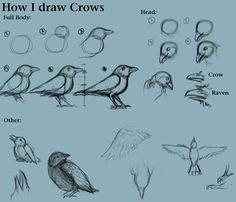 HOW TO DRAW A CROW