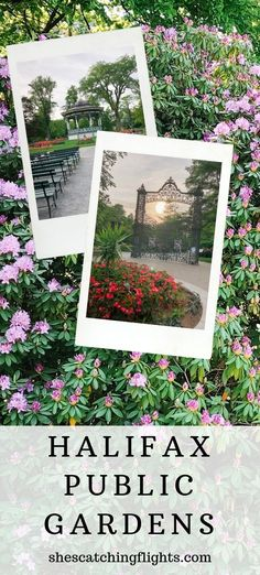 The Halifax Public Gardens is something to do when you're looking for things to do in Halifax Nova Scotia. Check it out in Downtown Halifax! Canada Cruise, Canada Travel, Halifax Canada, Montreal Canada, Halifax Public Gardens, Vancouver Chinatown, End Of Spring, Stuff To Do, Things To Do